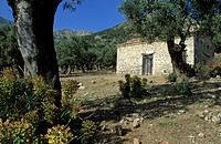 Old house in a olive tree forest, Samothraki island, Thrakia, Greece