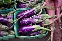 Eggplant, Riverdale Farmer´s Market, Toronto, Ontario