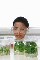 Female lab worker examining glass jars containing plant material