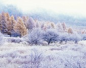 Trees covered in frost, Senjogahara, Nikko, Tochigi Prefecture, Japan