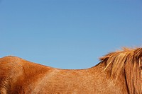 Horse against blue sky side view top mid section