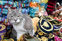 Cat in a store, Grand Bazaar, Istanbul, Turkey