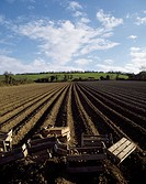Co Meath, Ireland, Ploughed field in preparation for potatoes