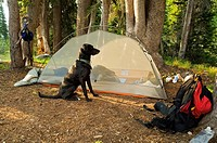 Eagle Cap Wilderness, Oregon, USA, Dog with tent and backpack