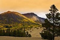 Carcross desert, Yukon Territory, Canada, World´s smallest desert