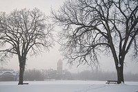 Assiniboine Park, Winnipeg, Manitoba, Canada, Bare trees and park benches in winter