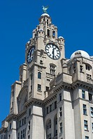 The Liver Building, one of the Three Graces, Liverpool, Merseyside, England, United Kingdom, Europe