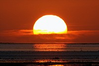 Autumn Sunrise, over the North Sea, with migrating waders, Lindisfarne, Northumberland, England, UK