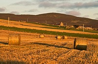 STENNESS ORKNEY Evening dusk light over straw bales hay field and farmhouse
