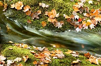 Autumn Leaves and Mossy rocks with detail of waterfall
