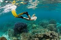 Abtauchen in Palau, Mikronesien, Palau, Skin Diving at Palau, Micronesia, Palau