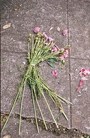 Dead Bouquet on Sidewalk