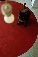 Black Cat on Red Table (thumbnail)