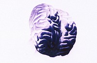 Brain (thumbnail)