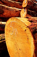 Cut Logs in a Stack