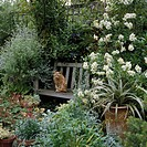 Cat sitting on a bench in a flower garden