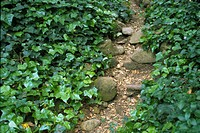 High angle view of plants growing on a path (thumbnail)