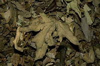 Close_up of a pile of dry leaves