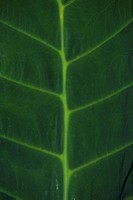 Close_up of a leaf
