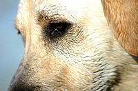 Close_up of a dog