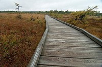 French Mountain Bog, Cape Breton Highlands Nat Park, Nova Scotia