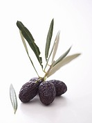 Olive sprig with dried black olives