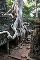 Big roots over the Ta Prohm Temple in Angkor temples, near Siem Reap City, Cambodia, Asia