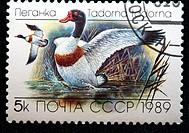 Common Shelduck Tadorna tadorna, postage stamp, USSR, 1989