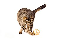 house cat play with Christmas glitter ball