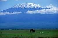 Kenya Kilimanjaro