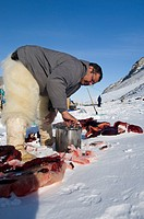 Qaanaaq, Greenland April 2006  Cooking bearded seal meat for dinner
