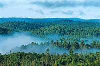 Aerial view of old growth forest and mist rising in Ontario´s Temagami Region.