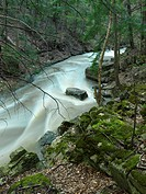 Spencer Creek rapids springtime scenic. Spencer Gorge Niagara Escarpment Hamilton Ontario Canada.
