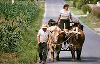 Farmers leading a cart drawn by oxen near Carballo, in Galicia, North-West Spain