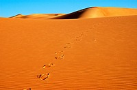 Footprints on a sand dune in the Sahara desert, Africa