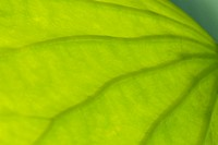 Abstract part of leaf pattern close up