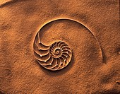 Nautilus sea shell in the sand