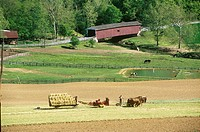 A team of horses helps to mow the hay in a field near Jackson´s Sawmill Covered Bridge. Lancaster County, Pennsylvania.