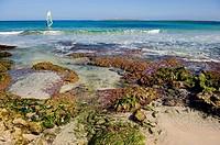 Windsurfing, Minorca, Balearic Islands, Spain