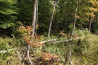 Pemigewasset Wilderness - Located just off the now Franconia Brook Trail this area is believed to be the remnants of the East Branch Lincoln Railroad ...