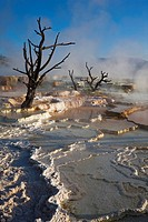 USA, Wyoming, Yellowstone National Park, Mammoth Hot Springs Terrace
