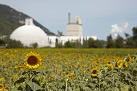 France, Sunflower Field, factory in background