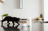 Black cat on counter with milk and cereal (thumbnail)