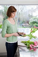 Woman cutting tulip stem