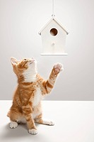 Kitten and birdhouse