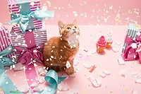 Kitten with confetti and gifts