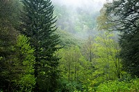 Spring Landscape, Newfound Gap Rd, Great Smoky Mountains National Park, TN