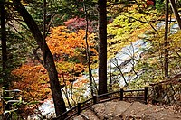 Yudaki falls , Yukawa river and Autumn tree landscape