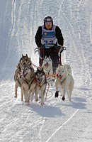 Pirena  Sled dog race in the Pyrenees going through Spain, Andorra and France  Baqueira Beret  Lleida Province  Catalonia  Spain