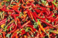 Indian spices , red hot chilli capsicum frutescens drying , Jodhpur , Rajasthan , India